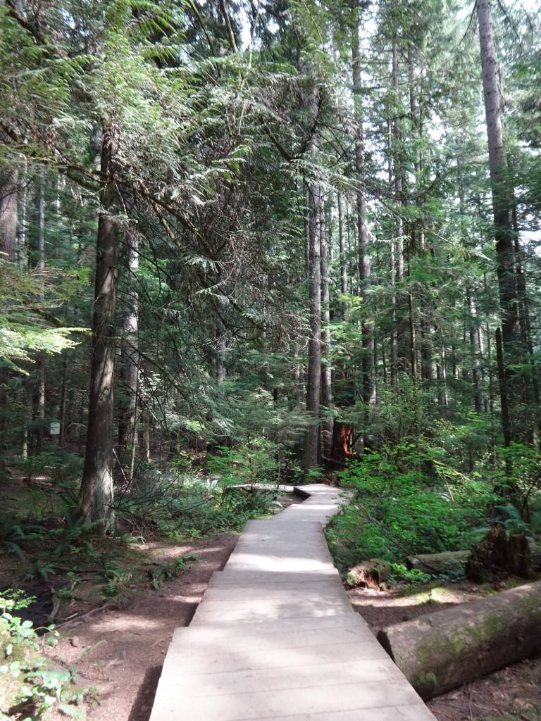 Hiking Lynn