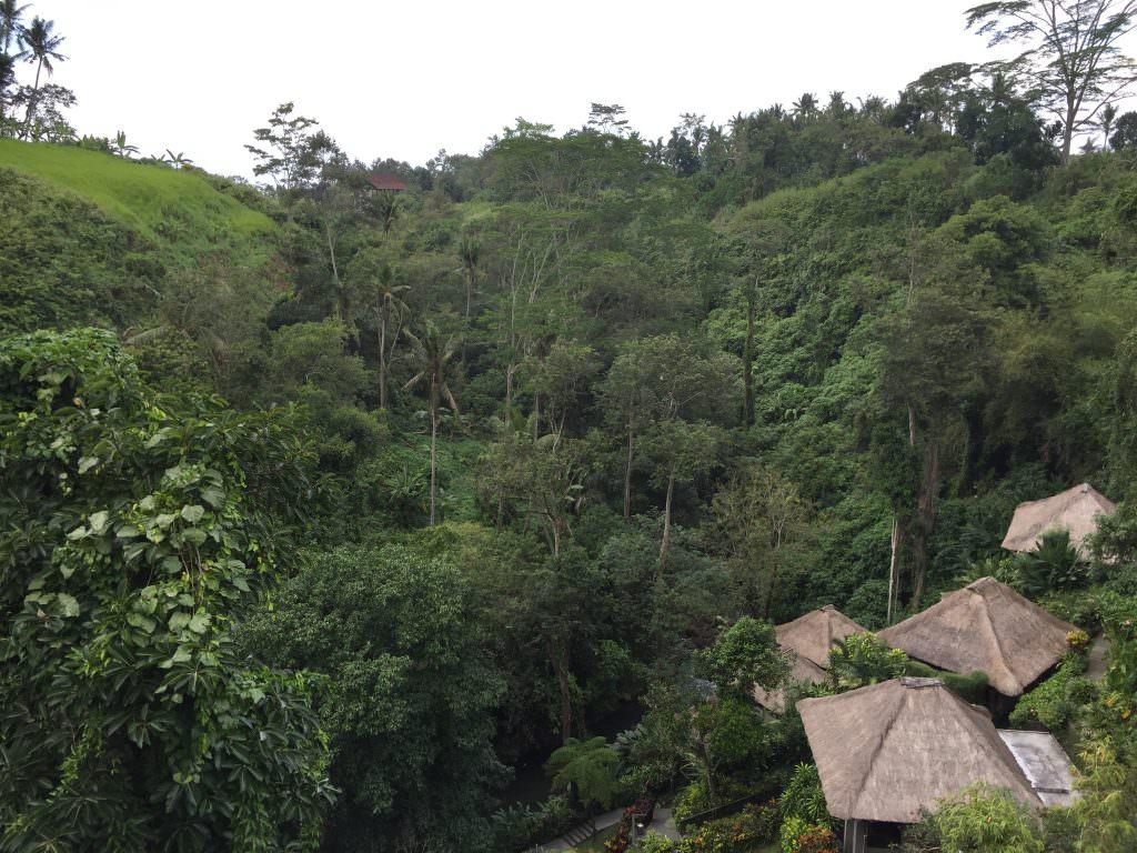 De natuur in Ubud, prachtig